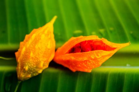 囲まれたバナナの葉に掛かっている食用植物は、露のしずきます。