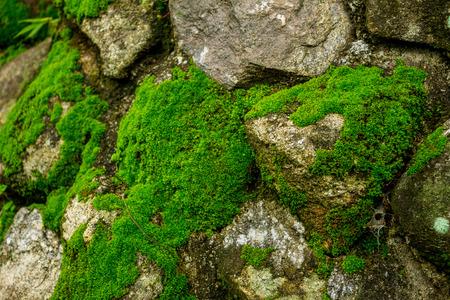 コケの自然の緑豊かな石。