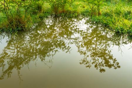 木の影が池から反映緑豊かな緑に囲まれました。