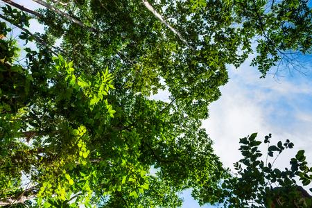 緑豊かな緑で育った農村地域における leafages。