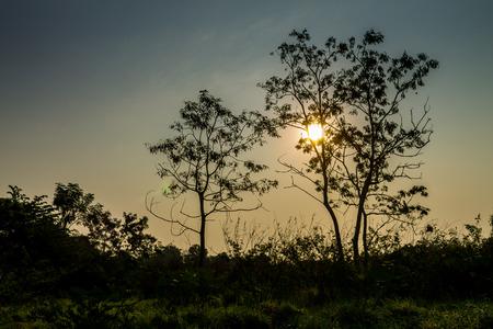 木の形状は、空から分離され、緑豊かな緑に囲まれています。 写真素材