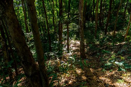 ジャングルトレイルは、農村部のどこかの場所で山の頂上に通じている。 写真素材