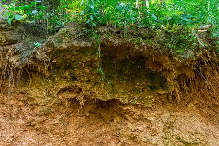 山の上で道路工事が始まった後、森の木々の根が目立つ。 写真素材