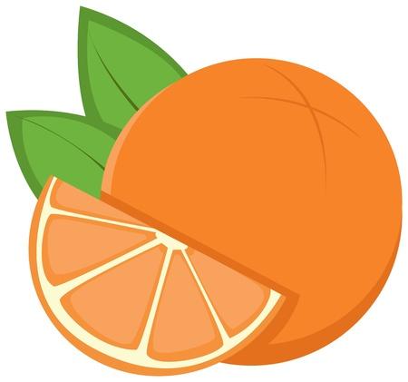 Oranges Illustration