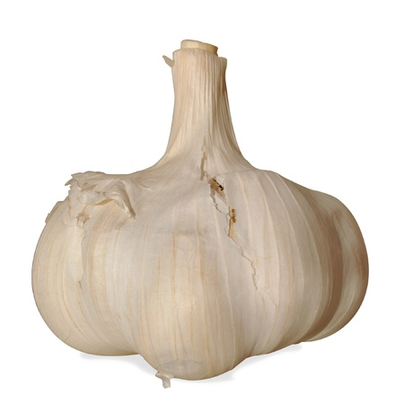 This is an isolated image of a Garlic