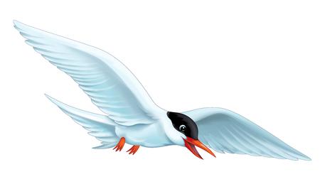 cartoon scene with flying bird tern isolated on white background illustration for children