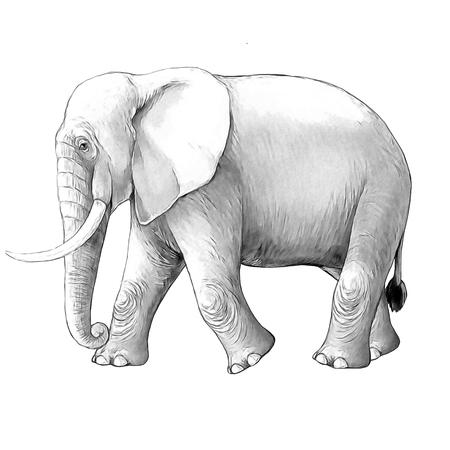 cartoon scene with big elephant on white background safari coloring page sketchbook illustration for children Banque d'images - 124455414