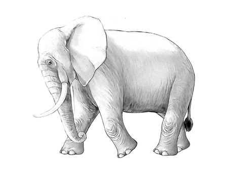 cartoon scene with big elephant on white background safari coloring page sketchbook illustration for children