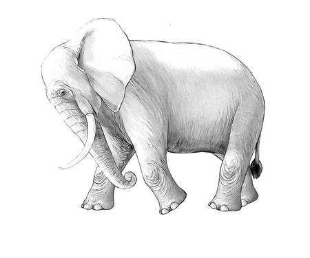 cartoon scene with big elephant on white background safari coloring page sketchbook illustration for children Banque d'images - 124455424