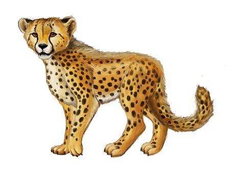 cartoon scene with young cheetah resting on white background illustration for children