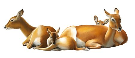 cartoon scene with koba lychee safari animal illustration for children
