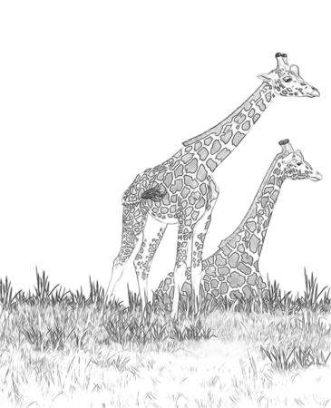 Safari - giraffes on the meadow coloring page - illustration for children Stok Fotoğraf