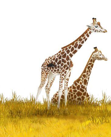 Safari - giraffes on the meadow - illustration for children