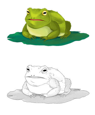 Cartoon animal frog toad sketch on white background illustration for children