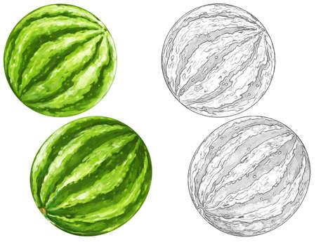 cartoon watermelon set on white background - illustration for children