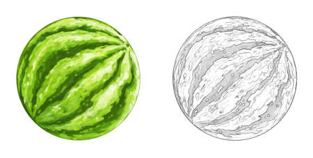 cartoon watermelon on white background - illustration for children