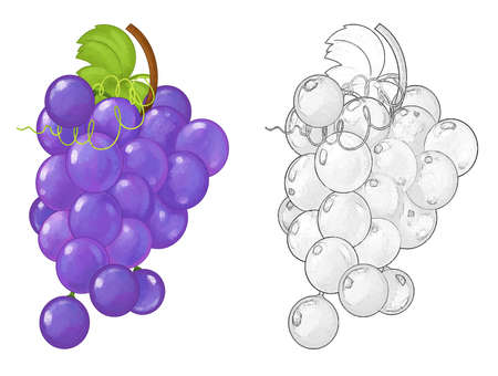 cartoon fruit grapes on white background - illustration for children