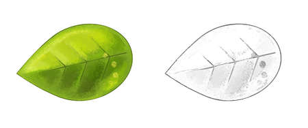 cartoon fruit leaf on white background - illustration for children