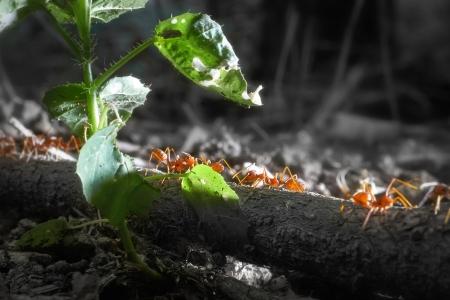 ant leaf: Cierre de imagen de las hormigas