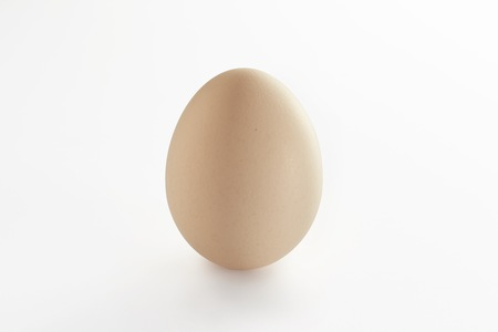Egg on clean white background