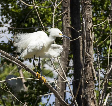 denver parks: Great white egret in Denver Park