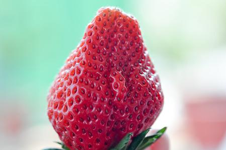 Red Fragaria Or Wild Strawberries, Wild Strawberry.