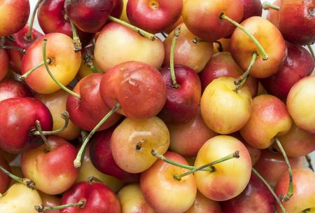 close up of freshly picked rainier cherry