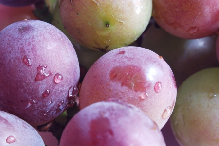 iuml:  Grape Stock Photo