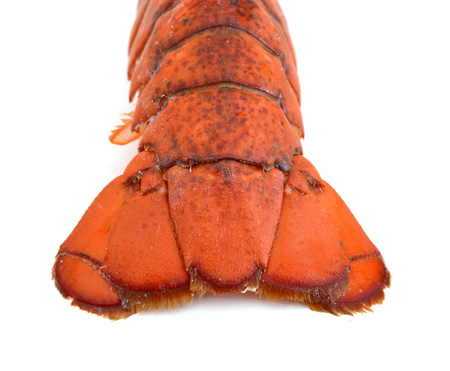 Photo of a Lobster Tail - Back lit on white Stock Photo