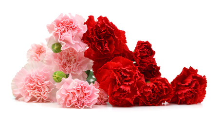 Red and Pink Carnations on white