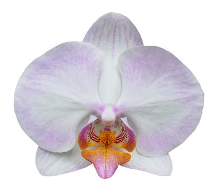 Orchid isolated on white background Stockfoto