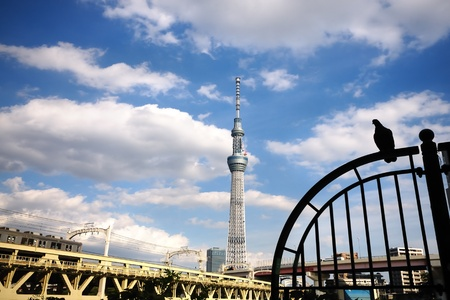 View of sky tree. photo
