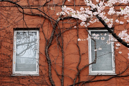 free images stock:  window.