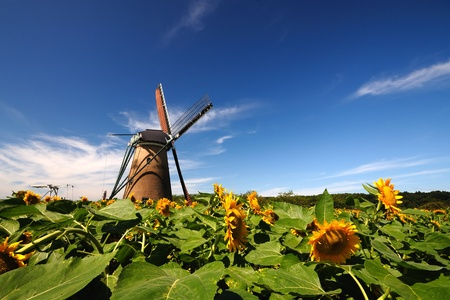 Dutch windmill in the garden sunflowers. photo