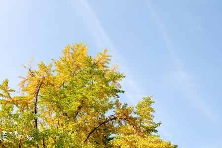 Yellow leaves. Stock Photo - 11209206