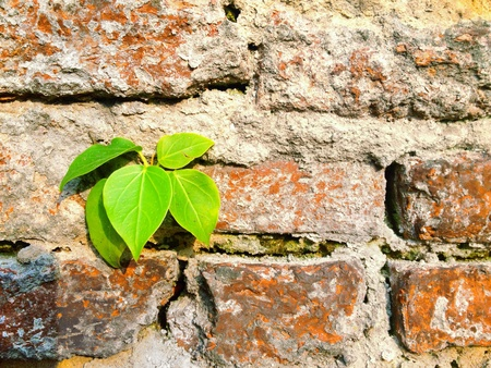 green been: A green plant been growing between roll of wall Stock Photo