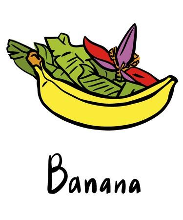 weegbree: Vector illustratie van de banaan met bloemen en bladeren Stock Illustratie