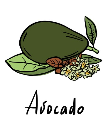 linoleum: Vector illustration of the avocado with flower and leaves
