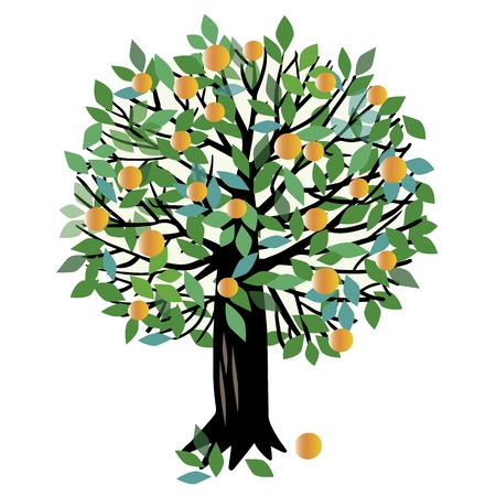 illustration of a fruit tree. Peach tree or Orange tree Illustration