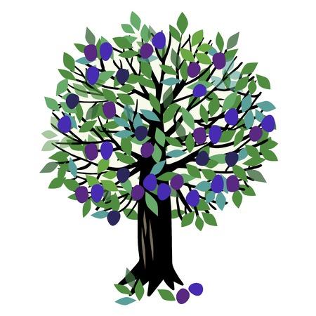 Ilustración de un árbol frutal. Ciruelo