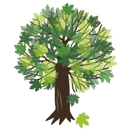 Vector illustration of a summer maple tree with green foliage