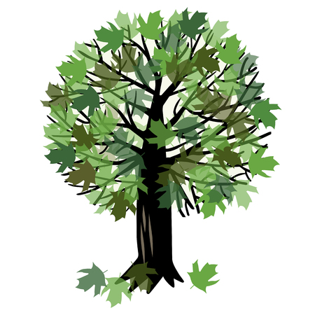 thick forest: illustration of a canadian maple tree with green foliage