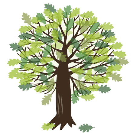 that: illustration with a summer oak tree that has green leaves Illustration