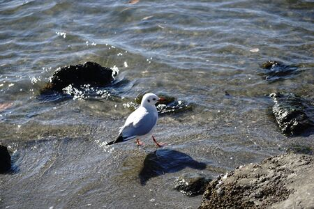 Gull Standing in Beach 写真素材