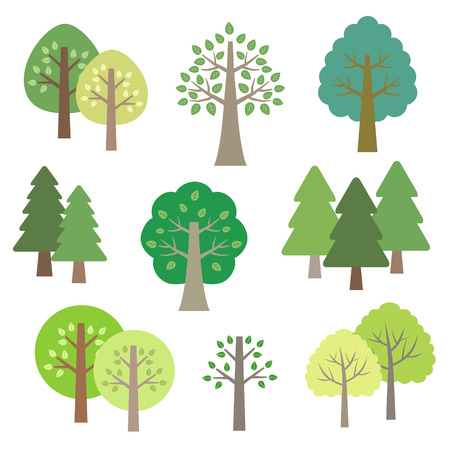 conifers: Set of trees