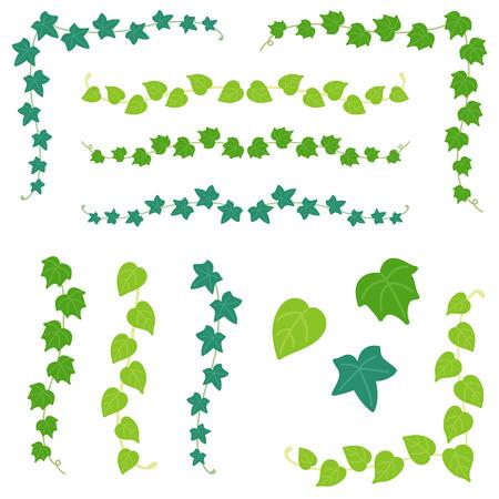 hojas parra: Conjunto de rama de hiedra Vectores