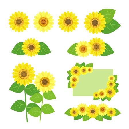 Set of sunflower Vector
