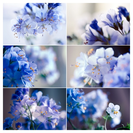Spring flowers, set of 6 images photo