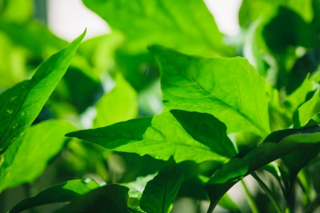 shallow: Green leaves, abstract floral background. Shallow depth of field