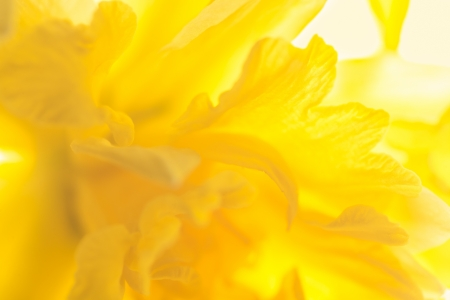 shallow: Abstract floral background. Shallow depth of field Stock Photo